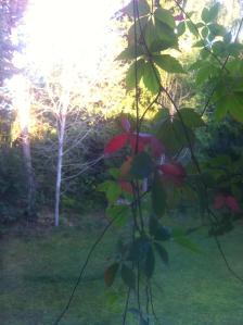 autumn-img_14871