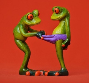 frogs-1248958_640