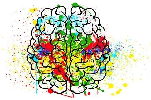 Hjärna-brain